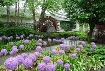 Watermill Gardens in Spring / Spring brings new life with budding trees and flowers through the gardens at Watermill Caterers. Schedule a tour by calling 631-724-3242 / by Watermill Caterers