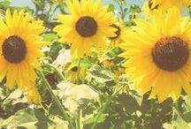 Pretty (Blooms) / by Kara Paulson