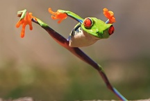 Frogs!!!!!!!! / by Betsy Killmeyer