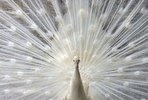 Birds / by Catherine Troy