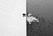 Vignette / by Jeremy Dent