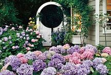 My secret garden / by Abigail Megginson