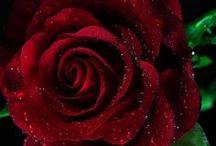 Flowers / by Nancy Busch