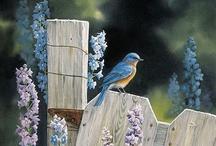 Garden Creations / by Tammy Fowler