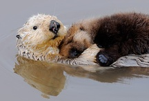 For the Love of Otters / by Lila Wengler