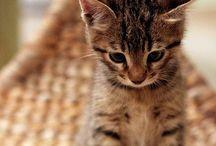 Cat Lady / by Shannon Shepherd