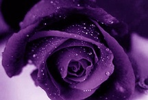 Purple / by Lu Bram