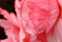 I Love flowers. / by Skylier Wear