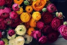 fiori / by natalie