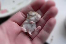 pure cuteness / by Cora Aylina