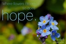 Flowers Bloom / by Wendy Galloway