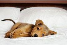 Puppy Love / by Swati Mahajan