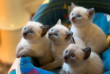 Just KITTENS / by Diane Vincent