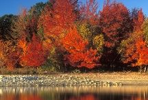 Fun Fall Destinations & Favorite Actvities / Fun Fall Destinations & Favorite Activities including Oktoberfest, Halloween, hayrides, festivals, fall destinations and changing of the leaves.  Please share, pin and have fun! Thanks!  / by The Magic Studio Newport, RI