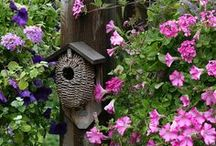 birdhouses... / by Nora Gholson