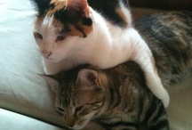 My cats...Loving / by Virginia Lopez