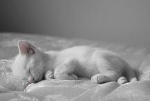 Cute Kitties / by Minerva Isabella