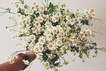 springtime. / by Catherine