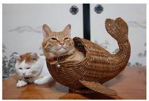 cat things / cat stuff / by Terri Wage
