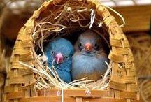Birds / by Diana Lincoln Kupferer
