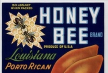 Honey Bee / All things about and from the honey bee. / by Becca Aspromonte