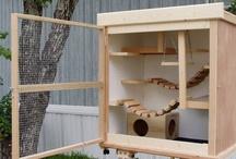 degu cage build / by Terri Ann Swallow