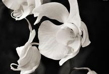 Flowers and Frondescence / by Jeffrey Beach