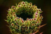 Flowers / by Jennifer Findlay