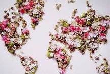 Flower Power / Pretty flowers brighten up a room / by Andrea Dájer