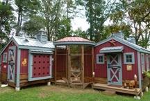 Chicken Coop ideas / by Rebecca Tiller