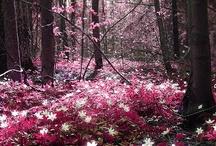 Awesome Finland / by Nobuo Tsuchiya