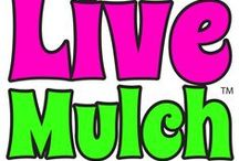 """LIVE MULCH - Groovy Ground Covers by Seed! / Pre-seeded mulch ground covers that you can plant in your existing mulch beds for a weed free garden - Just poke holes, sprinkle Live Mulch, water and watch it grow. Let your Landscape """"Boogie"""" with Live Mulch! / by Live Mulch"""