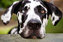 Dogs, dogs, dogs / by Karen Esenberg