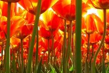 Orange / by Esther Oskam