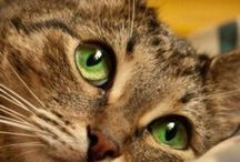kitties / by Cheryl Buckingham