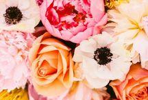 Flowers / Flowers / by Melinda Dame Christensen