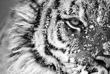 :: FAUNE :: / Magnifiques créatures... / by Anne-Laure Alain