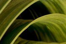 LEAVES / leaves / by Elaine Nasser ☆