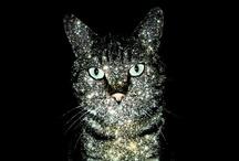 sparkle stuff / by CHELLE McClure