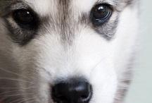 Doggies / by Shirlee Harris
