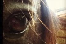 Horses / by Shirlee Harris