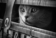 :: MATOU :: / J'aimais les chats de loin, je n'en ai jamais eu dans ma vie, ils me faisaient rêver. Maintenant depuis le 27 juillet 14, un petit chaton abandonné dans les bois et recueilli par mon fils est entré dans ma vie. Il se nomme Jazz.  / by Anne-Laure Alain