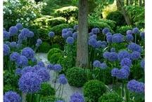 Garden / by Dixie Fisher