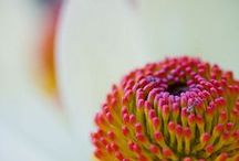 magnificent macro / macro photography / by Kristin D