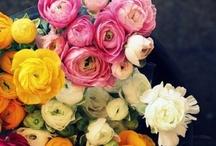 Bloom / by snapsandscraps