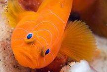 Sea Life / by Bridgett Idell