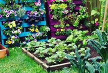 Outdoor Ideas and Projects / by Heather Shafer