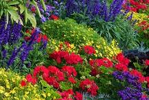 Gardens.... / by Connie Martin