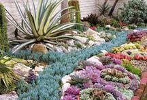 garden inspiration / by Nancy Heard