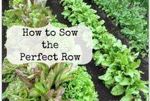 my green thumb / gardening tips & ideas / by Kellie Martineau